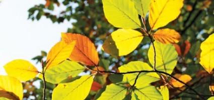 В сентябре листья жгут…