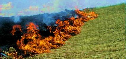 Огонь приходит по траве...