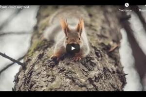 Будь лесу другом (видео)