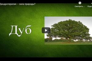 Дендротерапия – сила природы? (видео)
