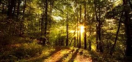 Отдыхаем в лесу безопасно