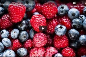 Ягодные дары белорусских лесов (видео)