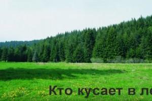 Кто кусает в лесу (видео)