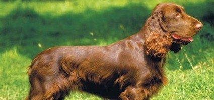 Собаки-человеки: Жако