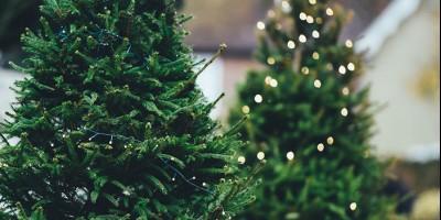 Как выбрать новогоднюю ёлку?>