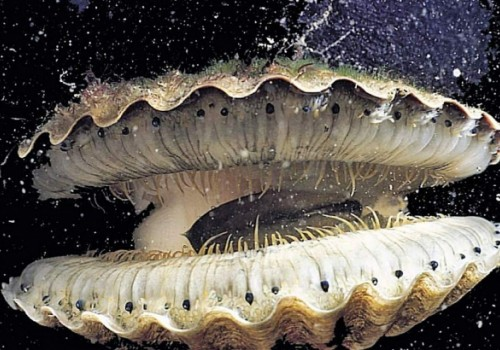 Рак боится моллюсков>